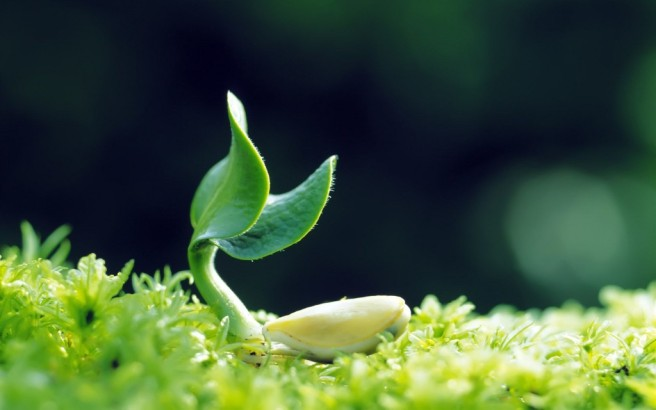 plant-growing-nature-picture-hd-wallpaper-background-1024x640
