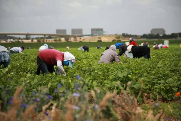 protect-vital-migrant-and-farm-workers-during-coronavirus-bishops-say